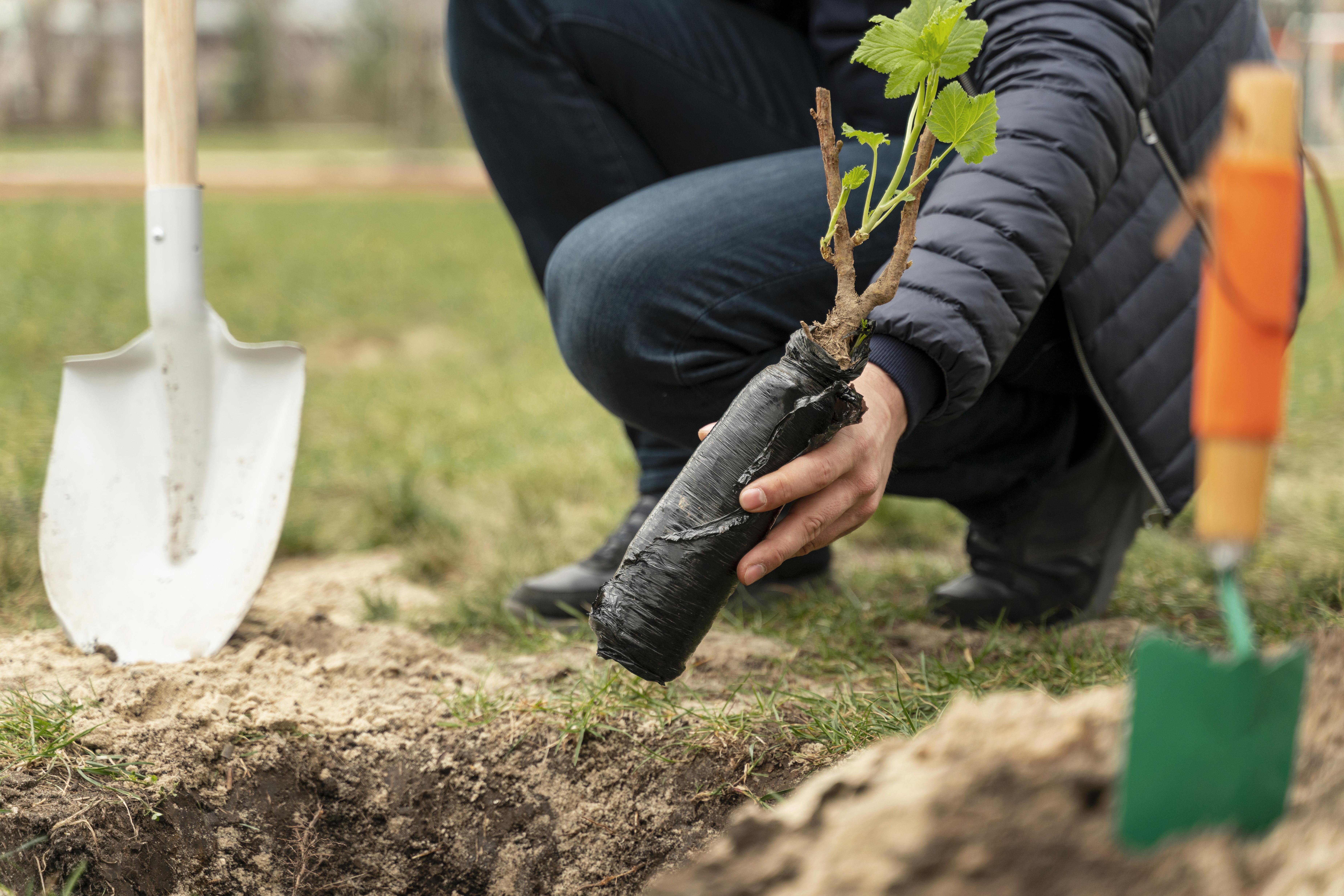 man-plating-ground-small-tree